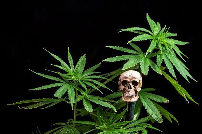 Куріння марихуани
